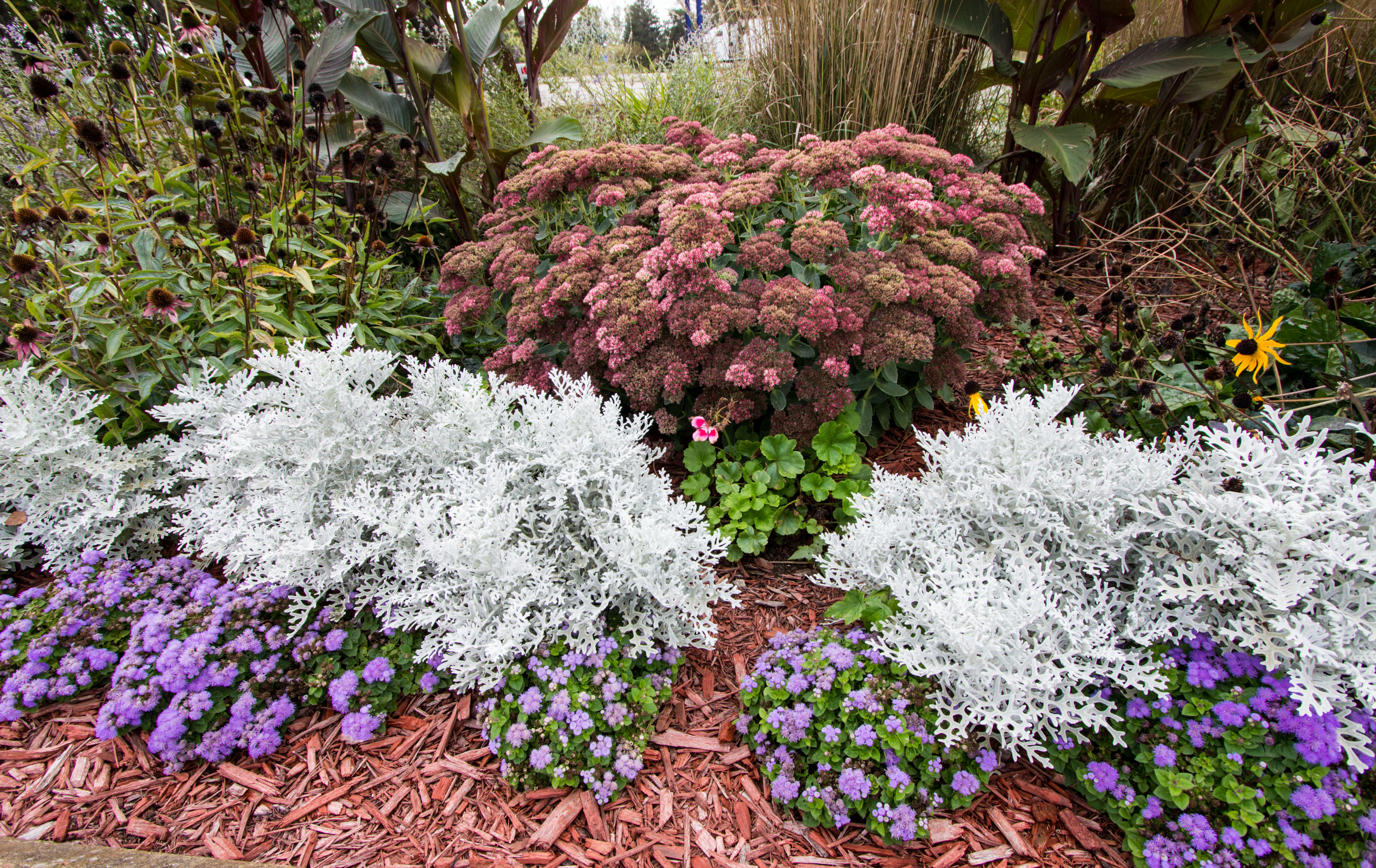 5 Benefits of Drought Resistant Landscaping